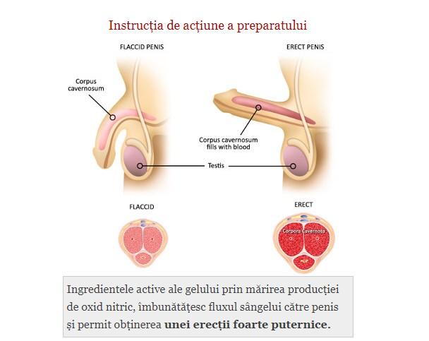 reglarea penisului)