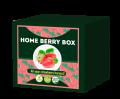 Home Berry Box – Fii propriul tău producător de căpsuni